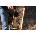 Miel fleurs, sapin et agrumes Vlahos 450g 2