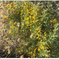 Miel de sapin et fleurs Kastoumis 250g 2