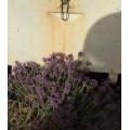 Miel de sapin et fleurs Kastoumis 250g 3