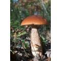 Champignons de la forêt deshydratés 25g 1