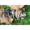 Champignons de la forêt deshydratés 25g 3