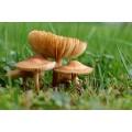 Champignons de la forêt deshydratés 25g 5