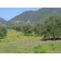 Huile d'olive Bio Eleonas de l'île d'Eubée 750ml 5