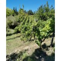 Vin rouge Goumenissa Bio Chatzivaritis 750ml 4