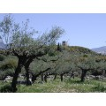 Olives bio de Kalamata et vertes dénoyautées  au naturel 4