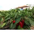 Purée d'aubergines et poivrons BIO 260g 2