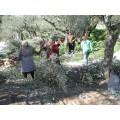 Pâtes d'olives vertes Chalkidiki BIO 100g 2